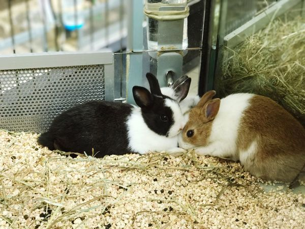 Animal Themes Mammal Domestic Animals Pets No People Day Indoors  One Animal Young Animal Nature Close-up Rabbit