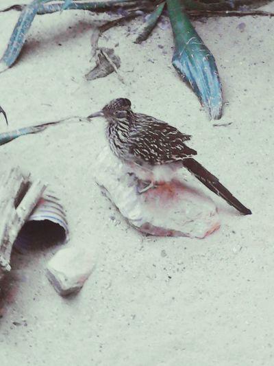 Animal Bird Bird Standing In Sand