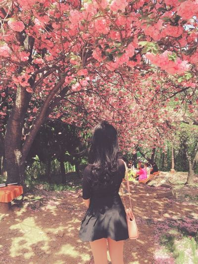 A month ago My Sister Pinkpink Pink Cherry Blossom Cherry Blossoms A Month Ago Lovely Place Lovely View