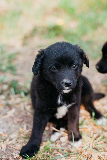 Portrait of black dog on field