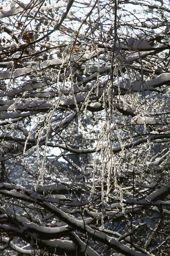 Backgrounds Beauty In Nature Branch Close-up Cold Temperature Day Nature No People Outdoors Snow Tree Winter