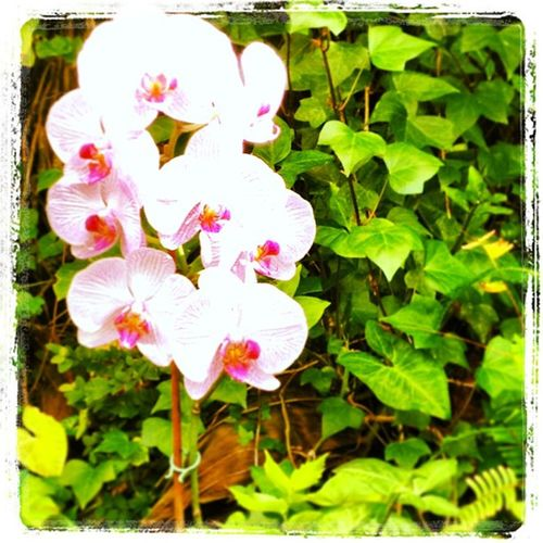 Orquideas Loro Parque