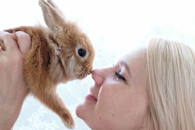 Close-up of woman playing with rabbit