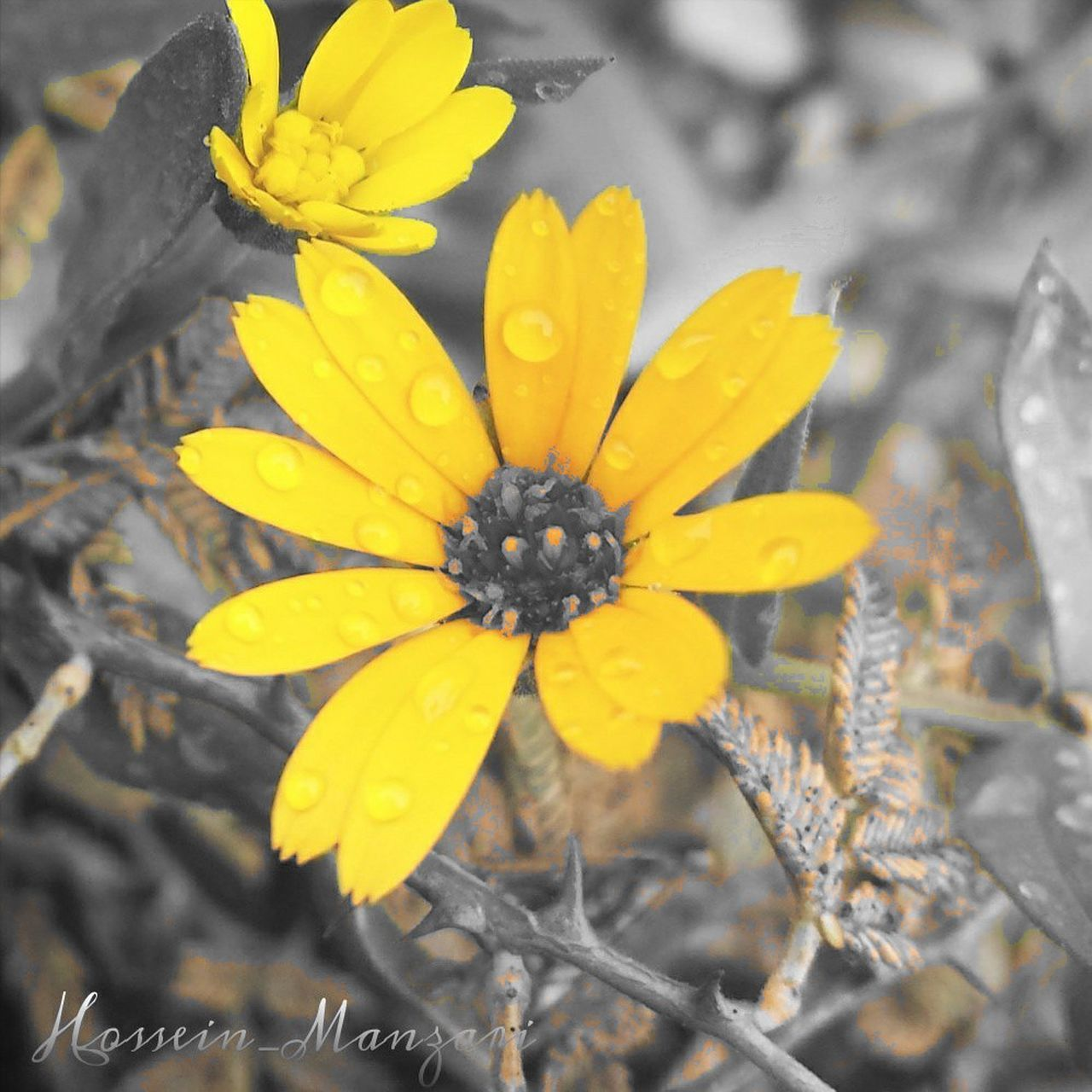 flower, petal, fragility, flower head, nature, yellow, freshness, beauty in nature, growth, blooming, close-up, day, outdoors, no people, plant