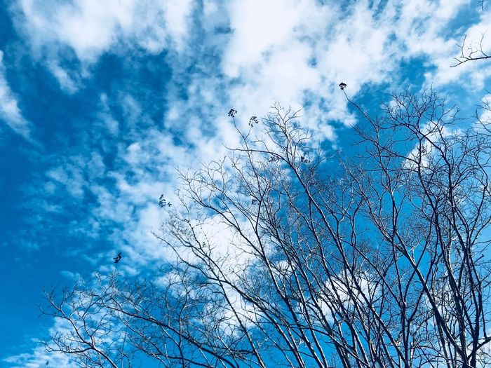 Beautiful sky 🌌 Nature_collection Winter First Eyeem Photo EyeEm Selects Sky Low Angle View Nature Cloud - Sky Beauty In Nature Day No People Flower Branch Tree Blue Animal Themes Growth Outdoors One Animal Bird Animals In The Wild Scenics Fragility Perching