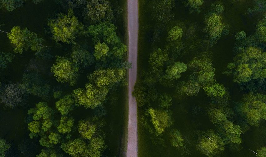 Directly Above Shot Of Road Amidst Trees