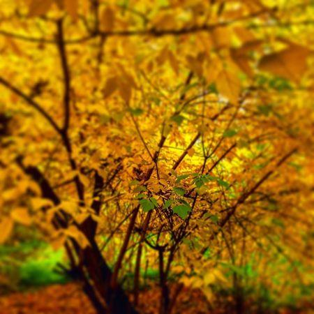 Autumn 🍂 KKrasnoyarsk