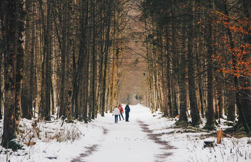 EyeEmNewHere Snow Tree Cold Temperature Forest Plant Land Leisure Activity Winter Beauty In Nature Walking The Way Forward WoodLand EyeEmNewHere EyeEmNewHere