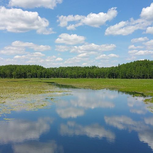 Ashville Hwy-Monticello, Florida (Jefferson County) 5/3/2015 Jw Jehovah Ourgrandcreator Jw_photographers Jehovahscreation Jwphotography LoveFl Visualsjw Naturelover Clouds Cloudporn Sky Skyporn Heavens Instasky Trees Water Glassy Reflection Samsung Galaxynote4