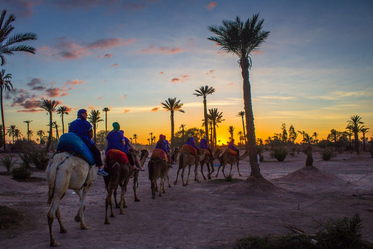 Desert train Blue Camels Camera Cloud Desert Light And Shadow Marrakech Marrakesh Morocco Orange Color Palm Tree Park Sahara Sand Sky Sun Sunlight Sunset Travel Yellow