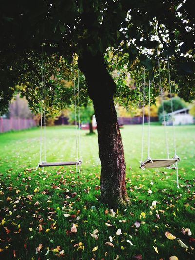 Garden swing Nature No People Beauty In Nature Tree Green Color Grass Rope Swing