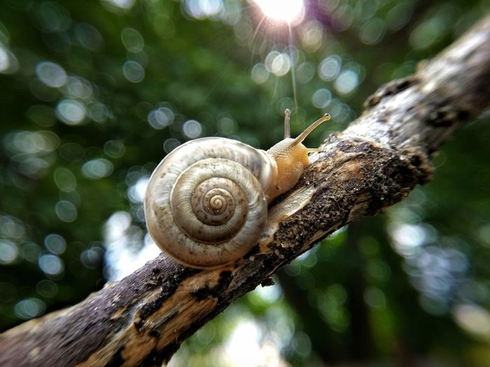 Close-up of snail on tree trunk