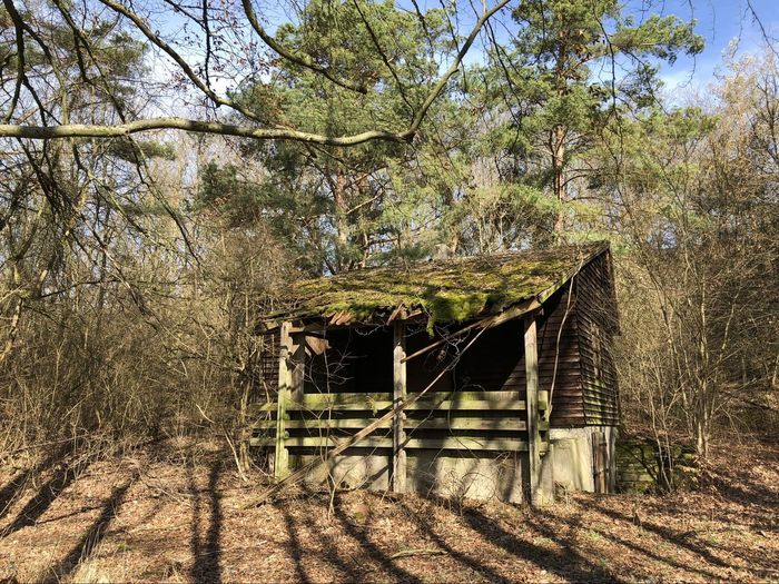 Trees growing in old building in forest