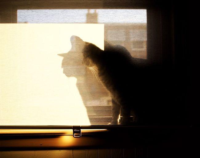 Shadow of cat on window