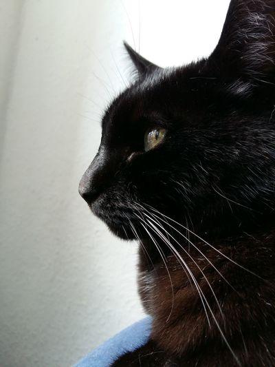 Katzenliebe Katzenaugen Katze Auf Tatze Babycat ❤ Katzenleben Cat Lovers Cat Cat♡ Katzen Playing With The Animals Katzen 💜 Cute Pets Katzenfoto Katzen<3 Meine Katzen Katze Animals Babycat🐱