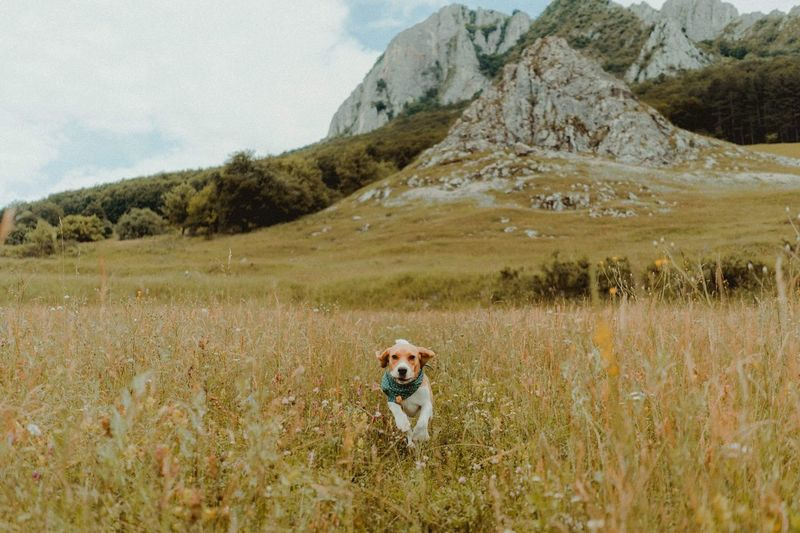 Pets Pet Nature Animal Animals Dogs Of EyeEm Dogs Mountain Plant Landscape Environment Grass One Person Field Scenics - Nature Beauty In Nature Nature Leisure Activity Canine Tranquil Scene Tranquility Dog Domestic Animals Adult Day Mountain Range