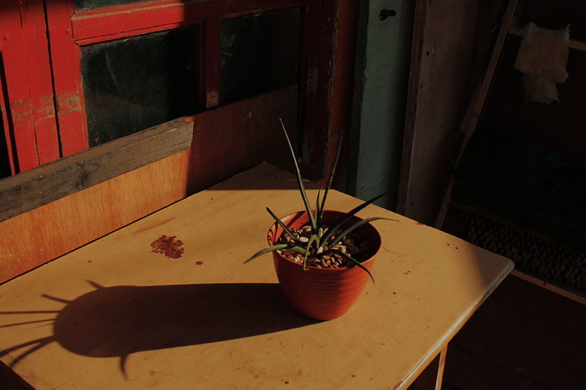 There is no reward living in false examination of reality Architecture Close-up Flower Flower Pot Growth High Angle View Home Interior House Houseplant Indoors  Nature No People Plant Potted Plant Sunlight Window The Still Life Photographer - 2018 EyeEm Awards