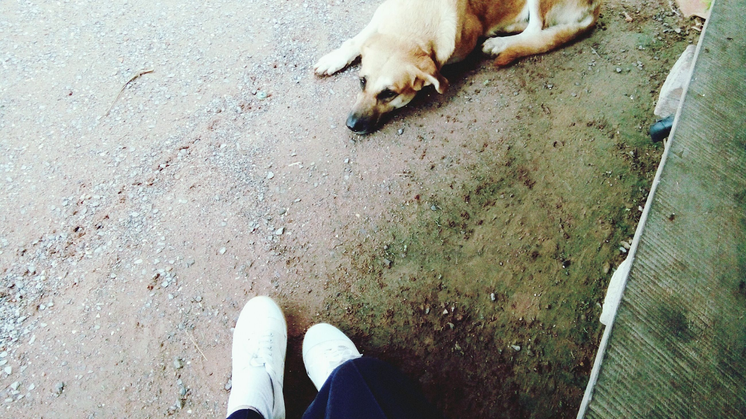 low section, person, personal perspective, shoe, high angle view, pets, domestic animals, animal themes, dog, human foot, mammal, standing, one animal, unrecognizable person, footwear, street, men