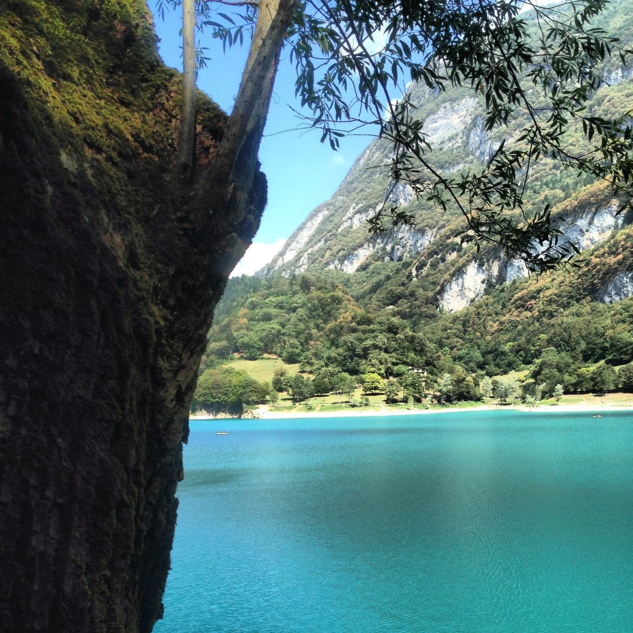 tree, beauty in nature, mountain, water, nature, tranquil scene, day, no people, scenics, outdoors, tranquility, scenery, sky