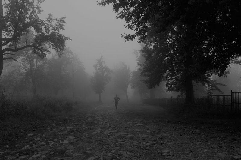 Tree Plant Fog