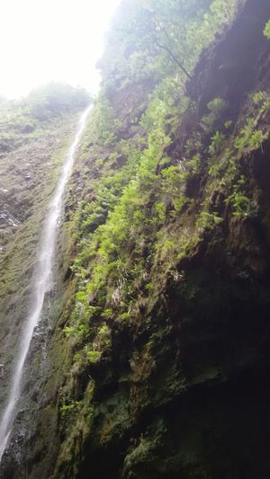 Nature Water Beauty In Nature No People Scenics Day Freshness Tranquility Outdoors Forest Landscape Waterfall Tree Mountain Sky Freshness Walks TripAdvisor IloveMadeira EyEmNewHere Madeira Islands, Portugal Tranquility Santana Queimadas Caldeiraoverde