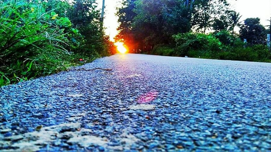 Callejeando Tree Street Nature Sunlight Road Outdoors No People The Way Forward Asphalt Leaf Land Vehicle Day Beauty In Nature Water Close-up Amanecer En Mi Ciudad Enjoying Life Hello World Berisso Nikonphotography