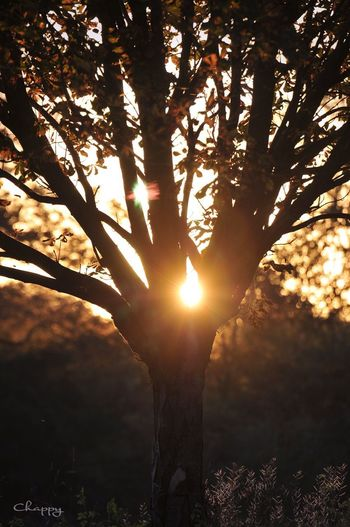 Sunlight Tree Sunlight Plant Sun Nature Sunbeam Sky Outdoors Silhouette No People Beauty In Nature