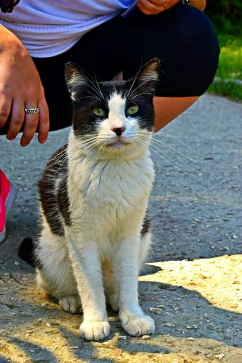 Pet Portraits Pets One Animal Domestic Animals Animal Themes One Person Human Body Part Domestic Cat Sitting Mammal Human Hand People Day Adult Outdoors Real People Feline Friendship Adults Only Close-up