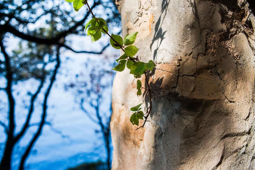 Portofino Natural Regional Park Wall Beauty In Nature Branch Cliff Close-up Day Fragility Growth Leaf Low Angle View Nature No People Outdoors Plant Rocks Sea And Sky Stone Tree Tree Trunk Water