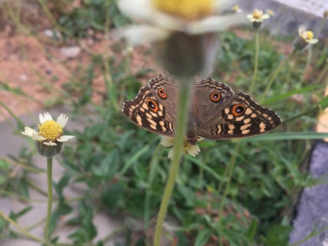 Animal Themes Animals In The Wild Beauty In Nature Butterfly Butterfly - Insect Close-up Day Flower Flower Head Fragility Freshness Growth Insect Nature No People One Animal Outdoors Plant
