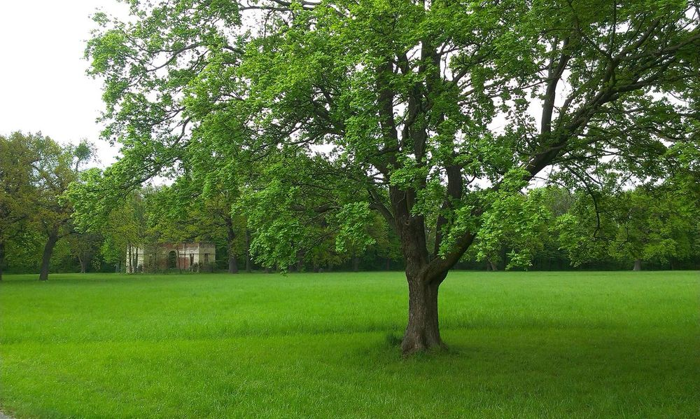 Nature Tree Park Green Outdoors Landscape Beauty In Nature Green Color Grass No People