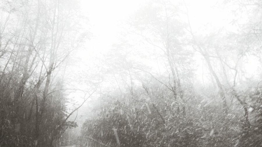 welcom snow~