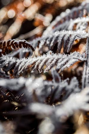 Winter Morning Frost Winter Landscape Woods Fern Winter Frosty Frost Cold Temperature Winter Snow Weather Frozen Nature Beauty In Nature Ice Crystal Outdoors Catkin No People Close-up Ice Selective Focus Day Snowflake