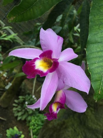 Flower Pink Color Petal Nature Beauty In Nature Growth Fragility Flower Head Freshness Plant Close-up No People Day Orchid Outdoors
