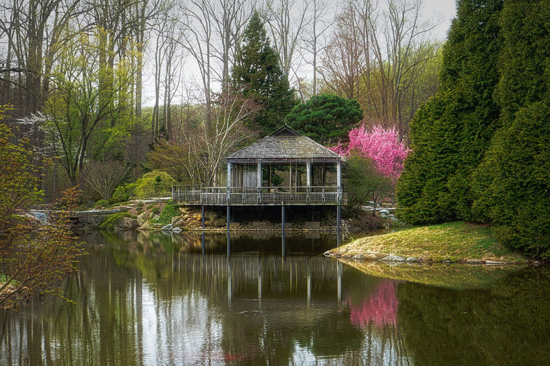 On a tranquil lake Water Tree Plant Lake Beauty In Nature Nature Architecture Built Structure Waterfront Tranquility Reflection Scenics - Nature Forest Idyllic Outdoors Tranquil Scene Floating On Water Reflections On Water Tea House Japanese Teahouse Cherry Blossom Tree