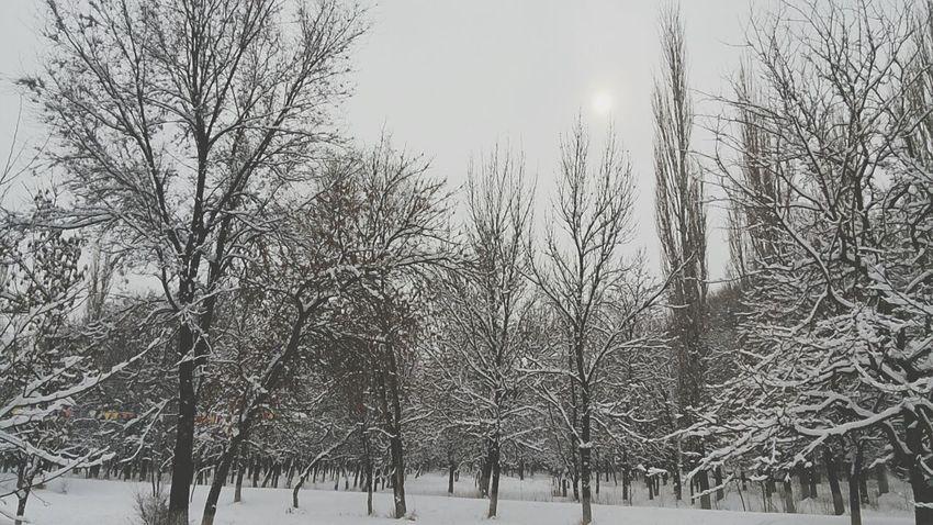 Snow Snow Day ❄ Taraz снег лесу лес и природа Тараз