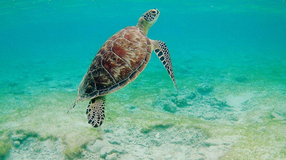 Underwater Sea Life Animal Wildlife Sea Animals In The Wild UnderSea Turtle Water Sea Turtle Nature No People Swimming One Animal Animal Themes Outdoors Day Tortoise Shell