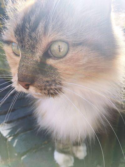 Cat Cats Cats Of EyeEm Catstagram Cats 🐱 Animals Animals Posing