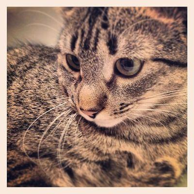 Afición tengo a las fotos oiga... Igersitzi Igersipad Igerscats Igersanimals