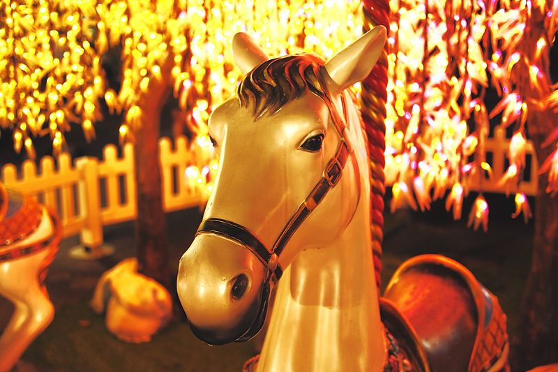 Carousel horse in amusement park at night