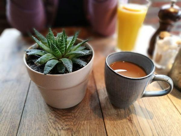 Coffee Cactus Table Pub Cafe Breakfast Weekend Drink Indoors  EyeEmNewHere EyeEmNewHere