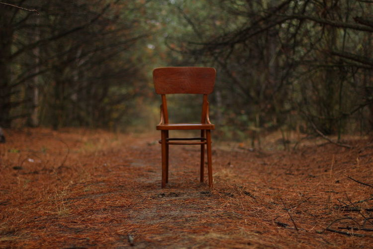 Chair and bare trees in forest