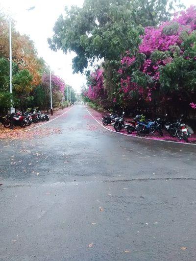 Flowers On The Road India Beautiful Beautiful Flowers Red Flower Both Sides~ Popular Photos Taking Photos Wintertime