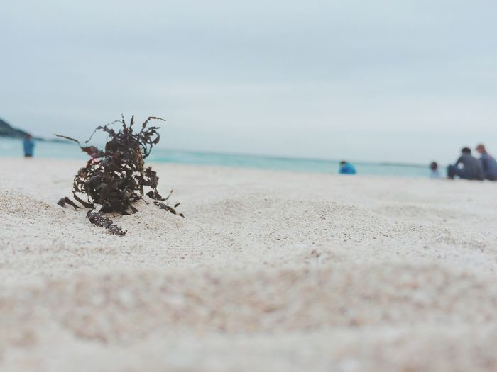 EyeEm Selects Beach Sea Sand Nature Day Animals In The Wild