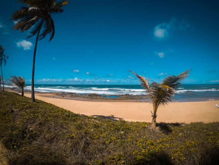 Beach Beach Beauty In Nature Day Growth Horizon Over Water Nature No People Outdoors Palm Tree Sand Scenics Sea Sky Tranquil Scene Tranquility Tree Water