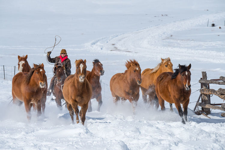 Feb 2019 - Music Meadows Ranch Colorado Herd Of Horses Winter Snow Domestic Animals Ranch Life Lasso Cowgirl Cowboy Galloping Horses Horse Outdoors White Color Nature Livestock Land Running Herd Cold Temperature Group Of Animals Field Animal Themes Horse Themes Domestic Herbivorous