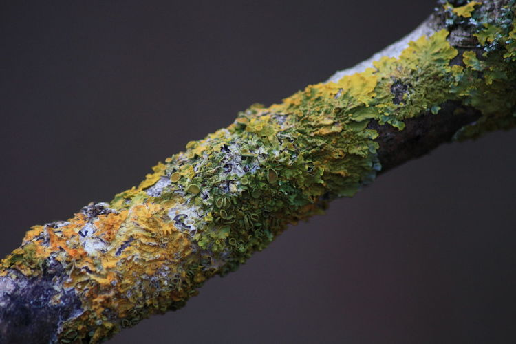Close-Up Of Moss On Stick