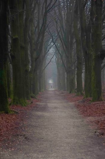 walking through time Scenics Caracteristic Caracter Fairytale  Beatiful Nature Old But Awesome Charming Enchanting Trees From My Point Of View Dutch Landscape Rural Scene Cold Days Forest Outdoors Tree Fog Autumn No People Nature Bare Tree Beauty In Nature Day