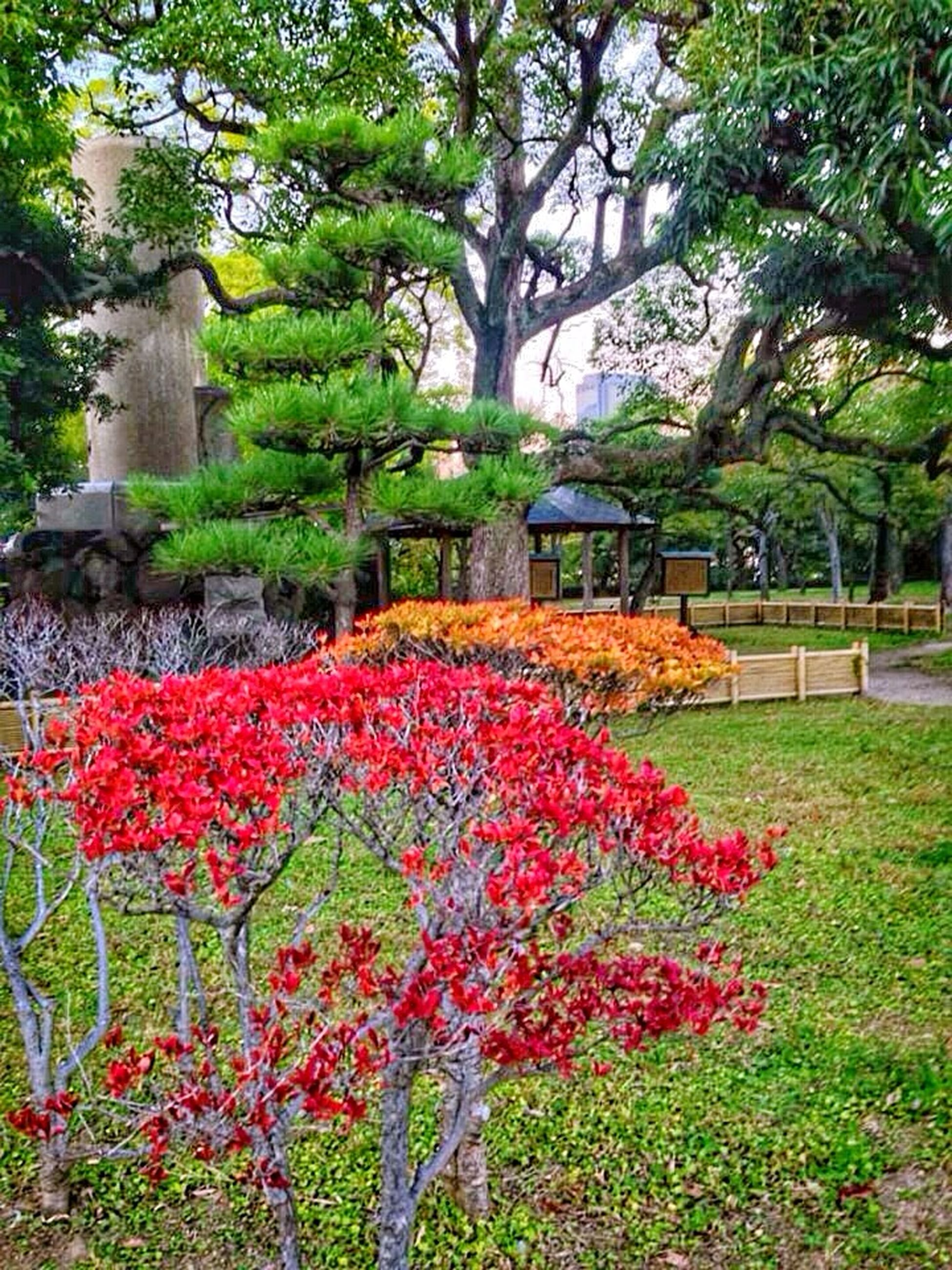 flower, freshness, growth, beauty in nature, tree, fragility, plant, nature, park - man made space, blooming, green color, formal garden, petal, red, pink color, blossom, garden, in bloom, lawn, flowerbed