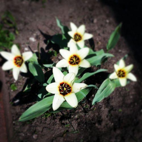 Z Ciozdim w ogrodzie. Ogrodek Wiosna Kwiatki Radość spring flowers happiness garden
